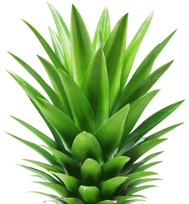 top of pineapple